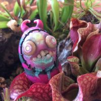 Eleanor the Bog Monster living amongst the venus flytraps, pitcher plants and sundews in a carnivorous plant bog garden. Fantasy art creature by Rachel Weaver.