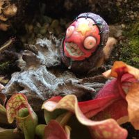 Florence the Bog Monster living amongst the venus flytraps, pitcher plants and sundews in a carnivorous plant bog garden. Fantasy art creature by Rachel Weaver.
